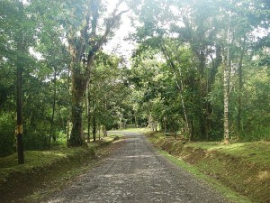 Birding the La Selva entrance road, Costa Rica