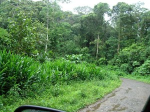 Costa Rica birding near San Ramon