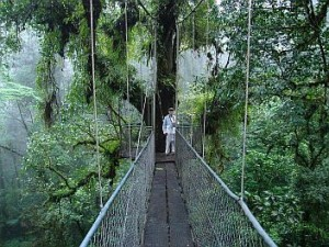 Canopy bridge at Heliconias, Costa Rica- great for birding Costa Rica