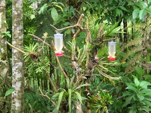 Hummingbird feeders birding Costa Rica