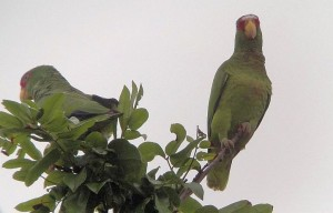 Birding in Costa Rica