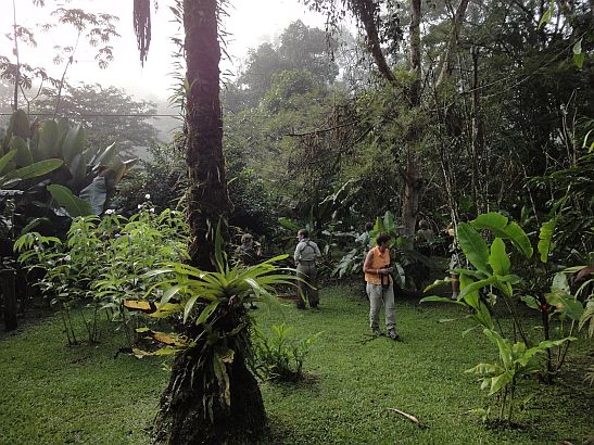 The Birding is Always Good at Esquinas Rainforest Lodge