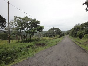 Good Birding on the Guacimo Road