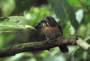 How does Birding in Costa Rica differ from that of the Temperate Zone?