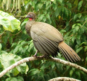 Want to Take Pictures of Birds in Costa Rica? Visit the Nature Pavilion!