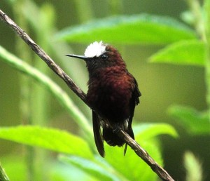 Bird Lands in Love for Some Seriously Good Birding in Costa Rica