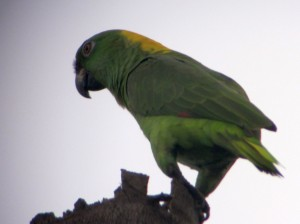 My Best Bird from Birding Costa Rica in 2013