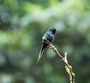 More Good Luck with Lowland Birding in Costa Rica