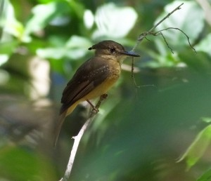 March, 2015 Birding News for Costa Rica