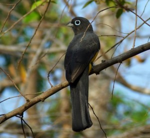 The Real Birding Hotspots in Costa Rica Part Two