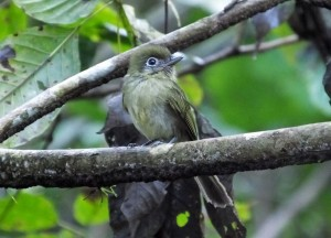 Birding at Los Campesinos, Costa Rica