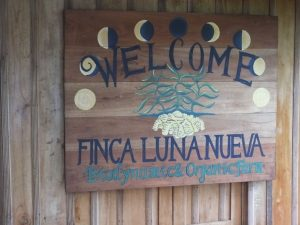 Costa Rica Birding Expectations- Excellent Birding at Finca Luna Nueva