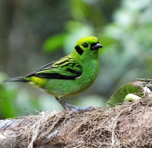 In Costa Rica for Birding? Now is a Good Time to Visit Quebrada Gonzalez