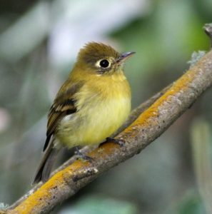 Five Reminders for Birding Costa Rica During the Winter