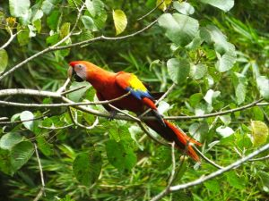 Macaws, Barbets, and an Ultra Tame Sooty-Faced Finch