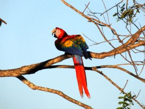 Key Accommodation for Birding Costa Rica-Cerro Lodge