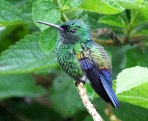Birding in Costa Rica? Some of the Coolest Resident Birds