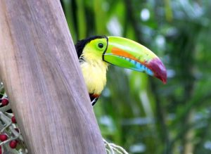 Recent Birding in the Southern Caribbean Lowlands of Costa Rica