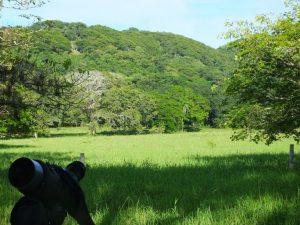 Horizontes- Good Birding in Guanacaste