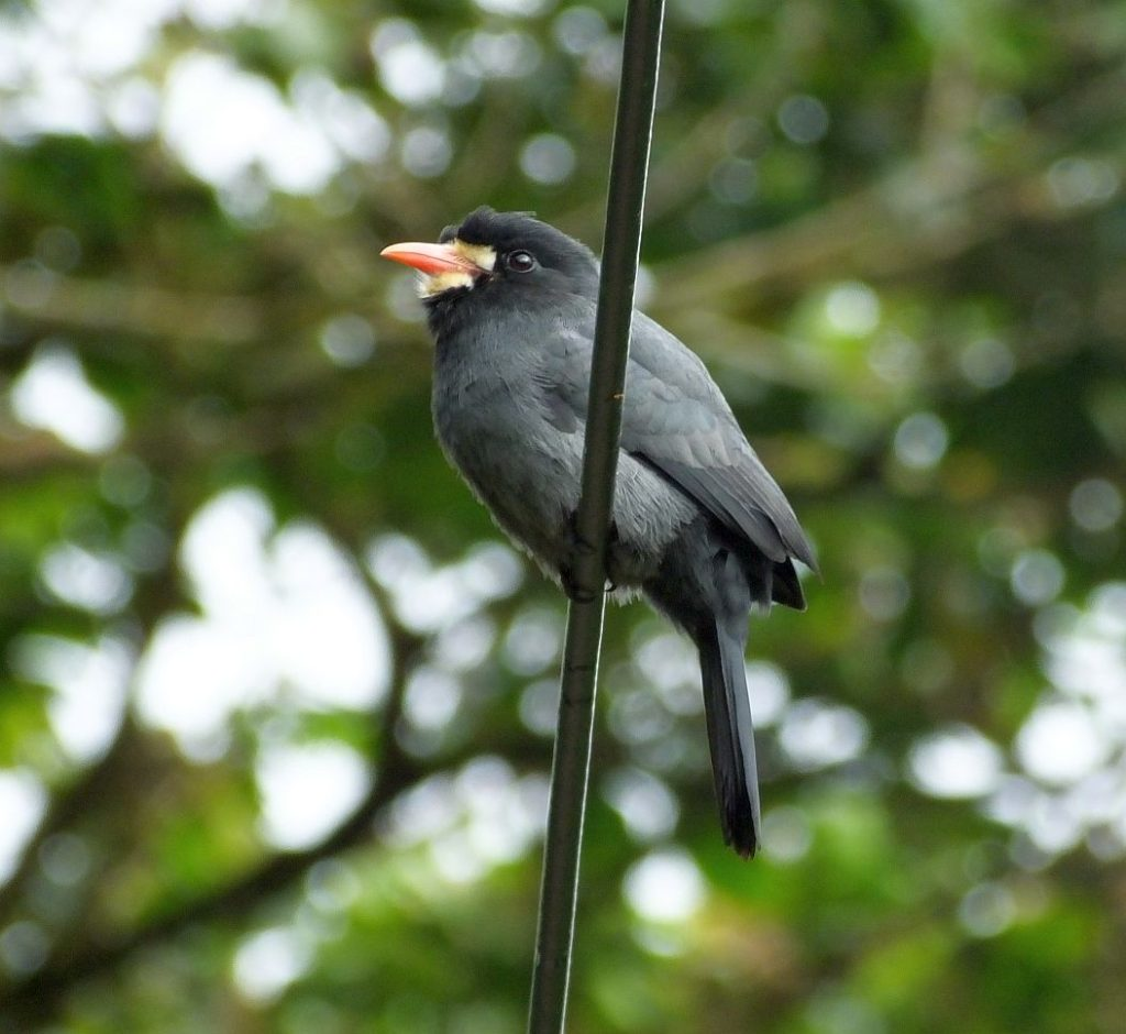What Can a Birder in Costa Rica See in Four Days of Birding?