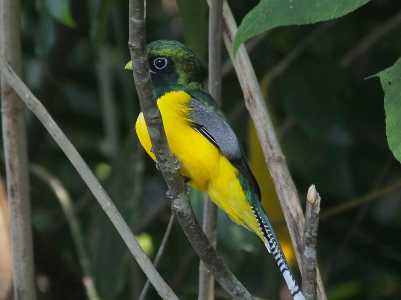 A Few Birds to Anticipate Watching in Costa Rica