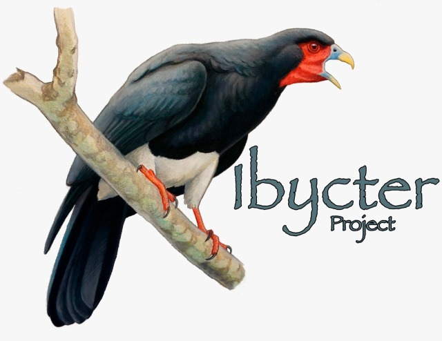 Get High Quality Bird Art = Support Conservation in Costa Rica