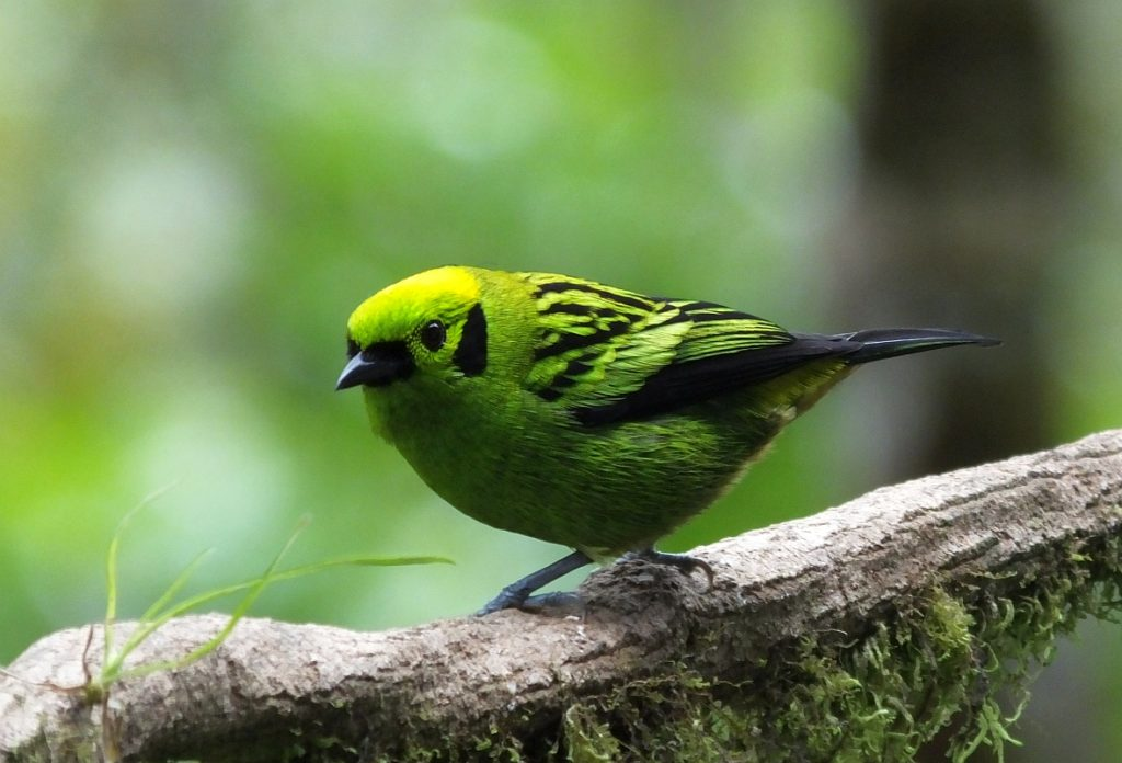 Costa Rica, July 2020- Where I Would Prefer to be Birding