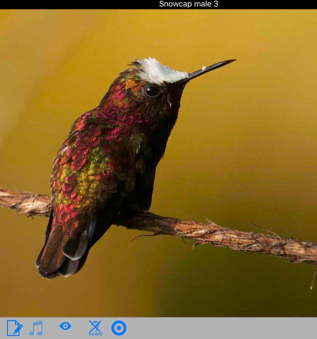 Snowcap in Costa Rica